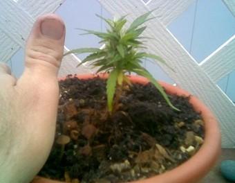 End 'Drug War' Corruption thumbnail